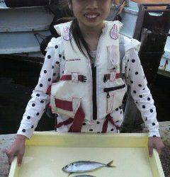 岸和田一文字 サビキでアジ〜23cm これからの数釣りに期待