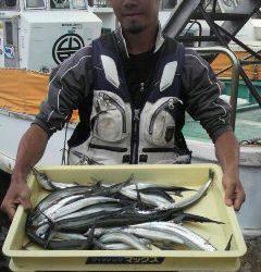 岸和田一文字 ウキ釣りでサヨリ40匹の釣果