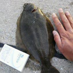 須磨 投げ釣りでマコガレイ33cm・キス18cmなど☆
