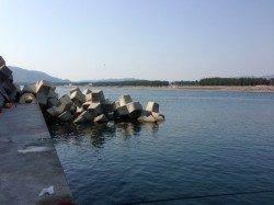 浜ノ瀬漁港先端のテトラでガシラ釣り、短時間で入れ食い♪