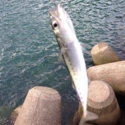 日置川河口へフカセ釣りへ行ってきました