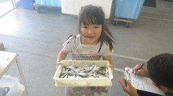 芳養漁港 サビキで豆アジ・イワシの釣果