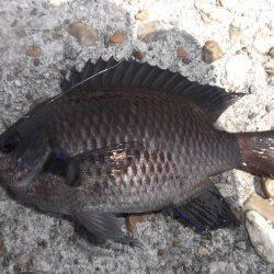 本荘人工島、サビキで小魚の数釣りを楽しみました★
