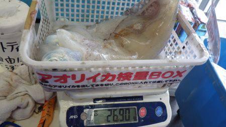 天神崎 ヤエンでアオリイカ〜2.69kg
