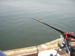 助松埠頭でエビ撒き釣り、11:30にキビレがHIT