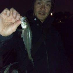 大阪南港 満潮からの下げ潮狙いのメバリングでメバル24.5cm