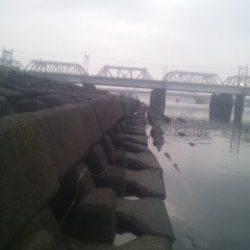 淀川河口でウキ釣り、カワアナゴが釣れました。