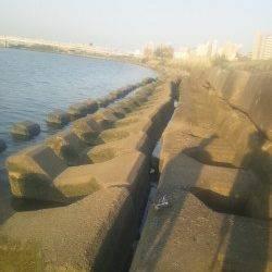 淀川河口 ウキ釣りでカワアナゴ〜26cm14匹!