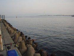 大阪南港 エビ撒きでセイゴ3匹&キビレ2匹