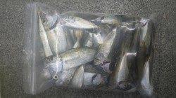 埴田漁港 投げ釣りでキス34匹 サビキでアジの釣果