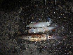 兵突の熱い夜釣り!