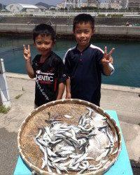 イワシが大漁ですよ〜 マリーナシティ海釣り公園
