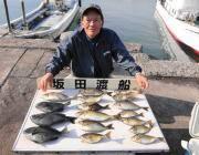 黒島の磯 アイゴ&グレの釣果