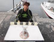 黒島の磯 エギングで1.5kgのアオリイカ