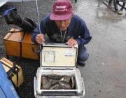 黒島の磯でのアイゴ釣り 数型ともに大満足