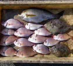神谷一文字 カゴ釣りでイサギ、チャリコ、ガシラなどの釣果