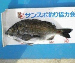 舞鶴田井でフカセ釣り、チヌ44.3cmあがっています