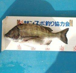 佐波賀地磯 フカセでチヌ46.3cm