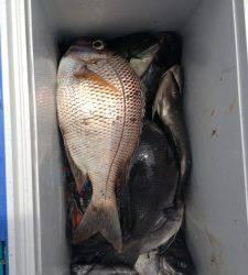 沖のカンゴメ、コッパ混じるも、グレ大漁!