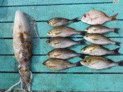ヒラバエ カゴ釣りでイサギ〜25cm ヤエンでアオリイカ1.3kg