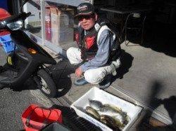 大磯でフカセ釣り、グレにアイゴに良型アジも
