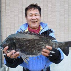 湯浅の磯 フカセでチヌ〜50.5cm
