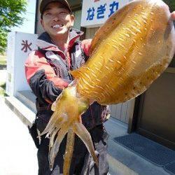 湯浅でアオリウキ釣り、1.8kgの綺麗なアオリです