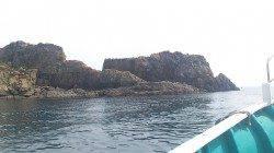 和歌山由良の渡船で蟻島の夜釣りでイサキの釣果☆