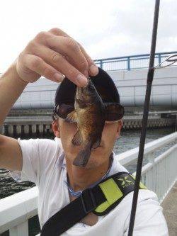 大蔵海岸でガシリングの釣果