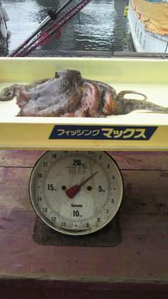 沖一文字で1.8kgのタコがあがっています!