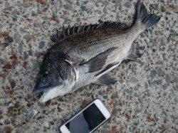 【釣り人多いです】南芦屋浜リアルタイム