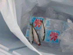 【釣れると楽しい】南芦屋浜リアルタイム