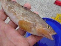 神戸各地RT 根魚とサビキ