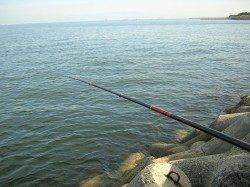 岸和田 フカセ釣りで同行の友人がチヌ46cm☆