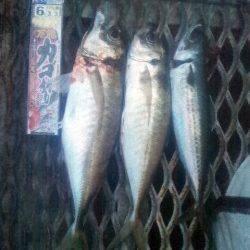 とっとパーク小島 カゴ・サビキ・フカセでアジを中心に7目釣り☆