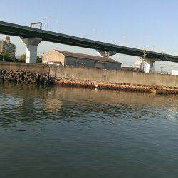 佐野漁港 朝6時から40分の釣行でシーバス60cm1本!