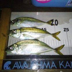 洲本 淡路島観光ホテルでのアジングでアジ〜24cm3匹 ドラグを鳴らすパワーは魅力十分!