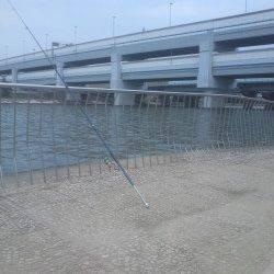 武庫川河口、ぶっこみ釣りでキビレ・セイゴ