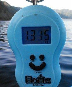 柴山港 エギングで今年初の春イカは1.3kg!