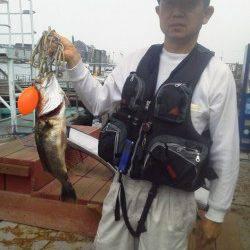 岸和田一文字 ウキ釣りでハネ60cmの他メバル&ガシラ