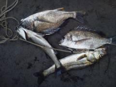 岸和田一文字16日のウキ釣り情報