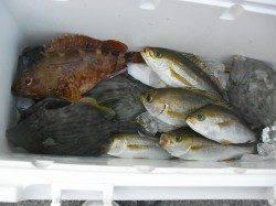 サカムラ筏へカセ釣りに、イサキ・カワハギなどの釣果☆
