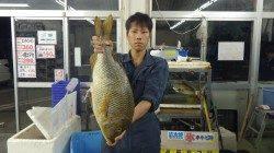 堺の堤防 サバの切り身でタマミ67.5cm