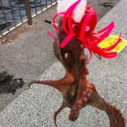 波止のタコも脂身で釣れます!南芦屋浜