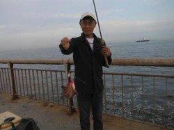 芦屋浜タコ好調!!グレも狙えます。