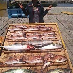 家島の海上釣り堀 釣りガールがマダイ15匹&メジロ・カンパチの好釣果