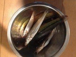 揖保川河口 ウキ釣りでベラ・投げ釣りでキスなど 穴釣りでガシラの釣果も☆