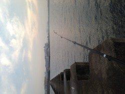 西宮浜 早朝1時間のタコ掛け釣行でマダコ2ハイ