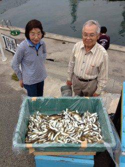 マリーナシティ、サビキ釣りでアジ1300尾の釣果☆