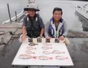 シラサでマダイ釣れてます 黒島の筏